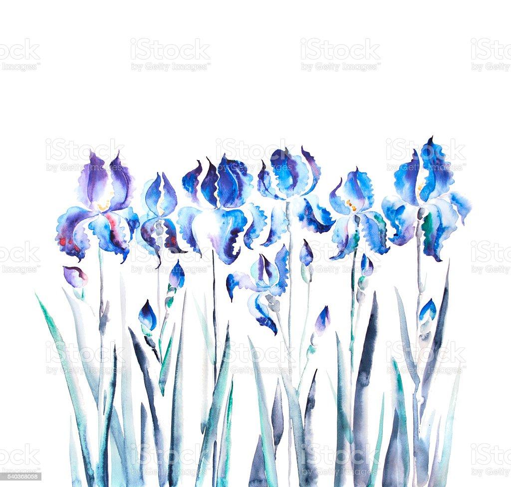 isolated  iris flower watercolor illustration stock photo