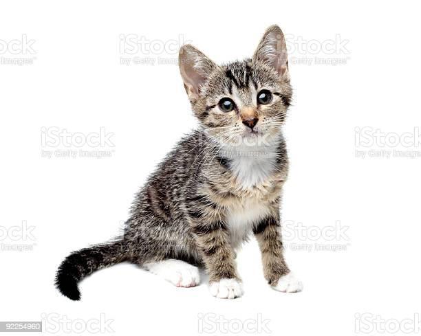 Isolated kitten picture id92254960?b=1&k=6&m=92254960&s=612x612&h=a2glpkhijbllul2eh3dsq9pdonmx41pqwgrgkg dbba=