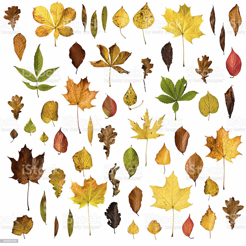 Isolated leaves collection royalty-free stock photo