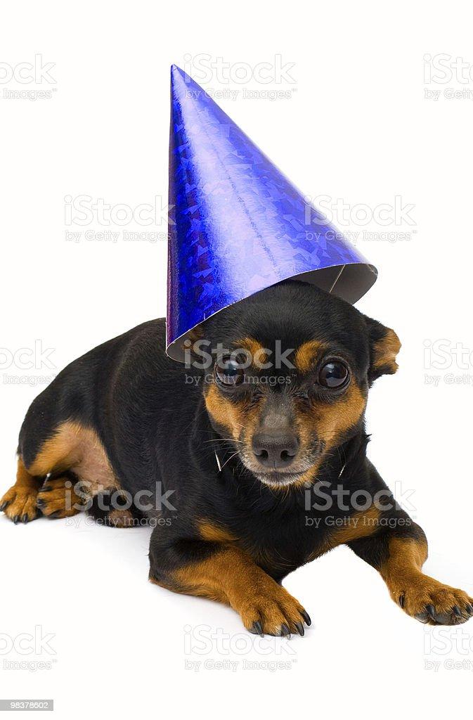 Piccolo cane isolato foto stock royalty-free