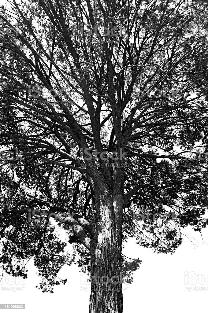 Isolated lone tree b&w stock photo