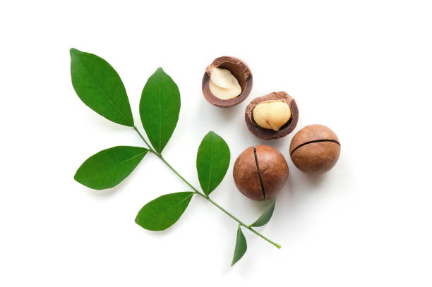 Isolated macadamia nuts with leaves. Macadamia nuts with leaves. Top view. macadamia nut stock pictures, royalty-free photos & images
