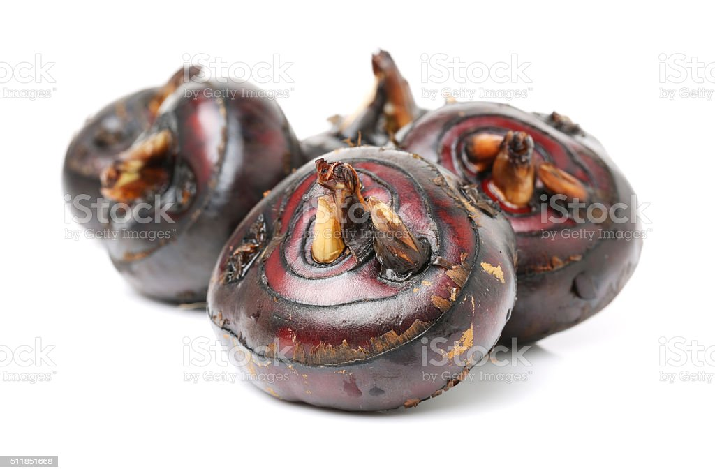 Isolated macro image of water chestnut stock photo