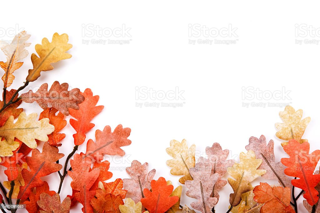 Isolated Oak Leaves royalty-free stock photo