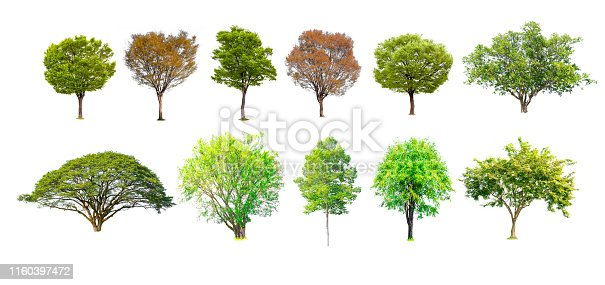 1146115746istockphoto Isolated of tree collection on white background and clipping path for ecology decoration website and magazine.- Image. 1160397472