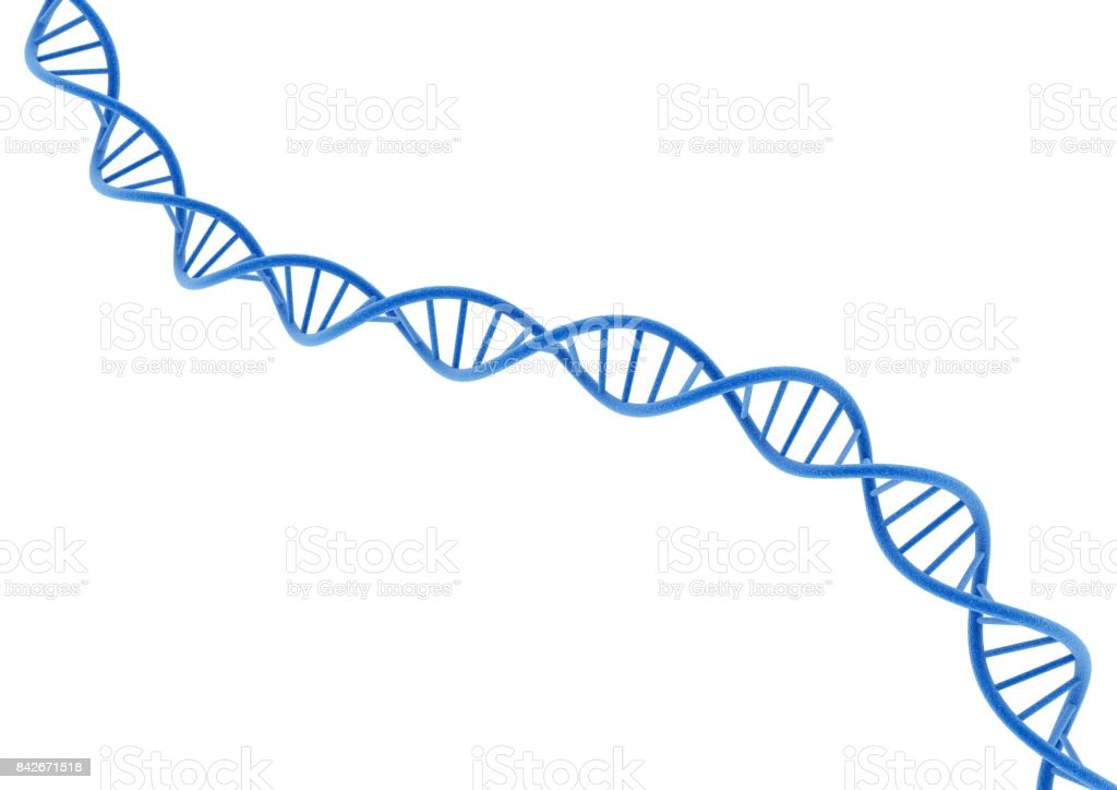 DNA isolated on a white background. royalty-free stock photo