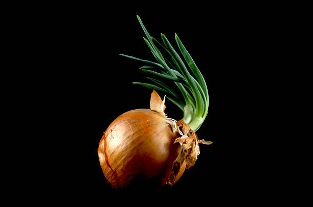 Isolated onion 2 stock photo
