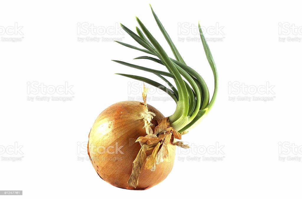 Isolated onion stock photo