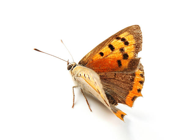 Isolated orange butterfly picture id116140477?b=1&k=6&m=116140477&s=612x612&w=0&h=ydf79yjjerim cxyitskr7gxvdrjmuwef z 44bwvz8=