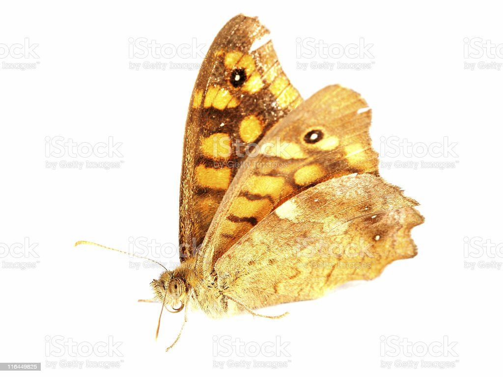 Isolated orange butterfly stock photo