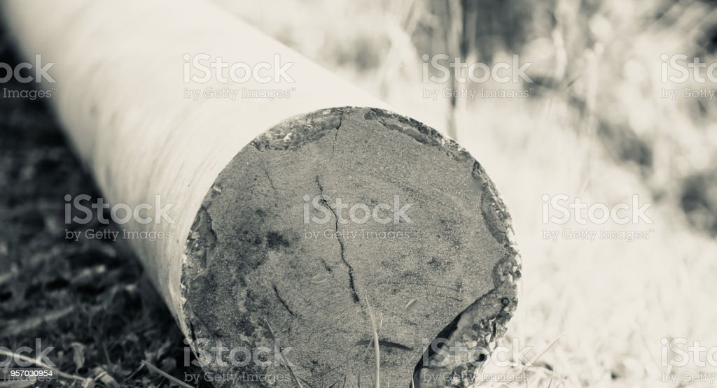 Isolated part of an electric pole unique photo stock photo