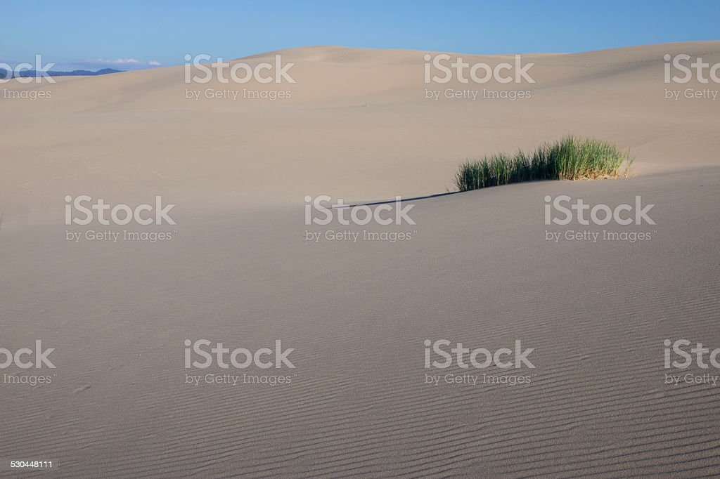 Isolated patch of grass on sand dune stock photo