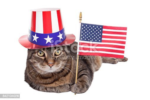 490776989 istock photo Isolated Patriotic Fat Cat Laying Down 542104026