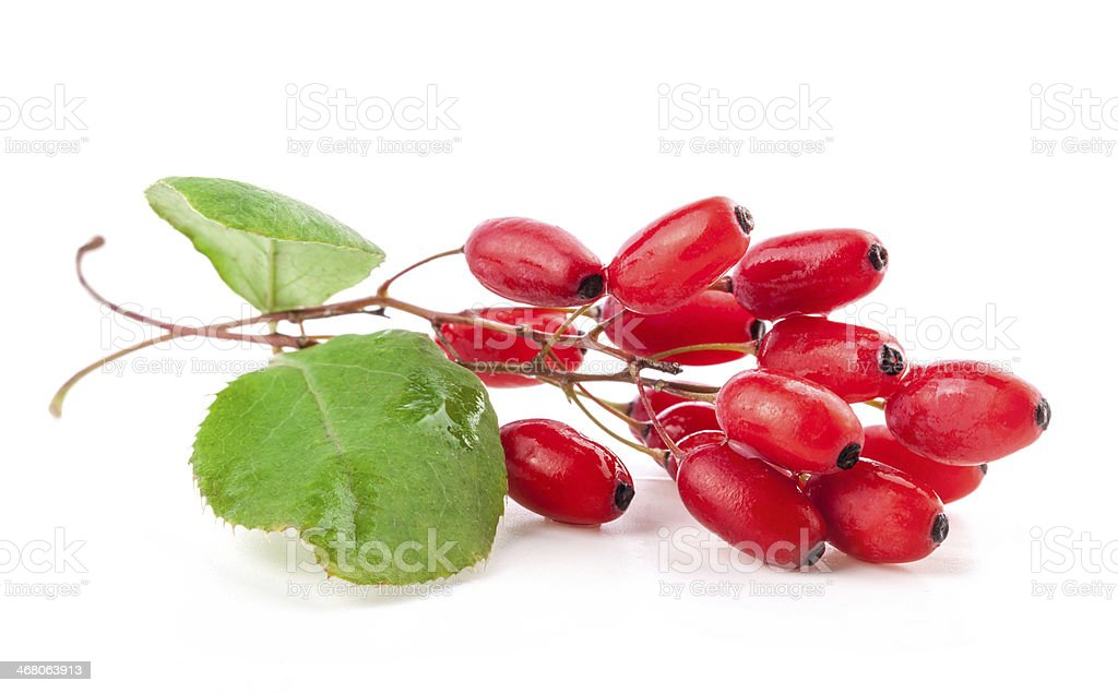 Isolated picture of a barberry stock photo