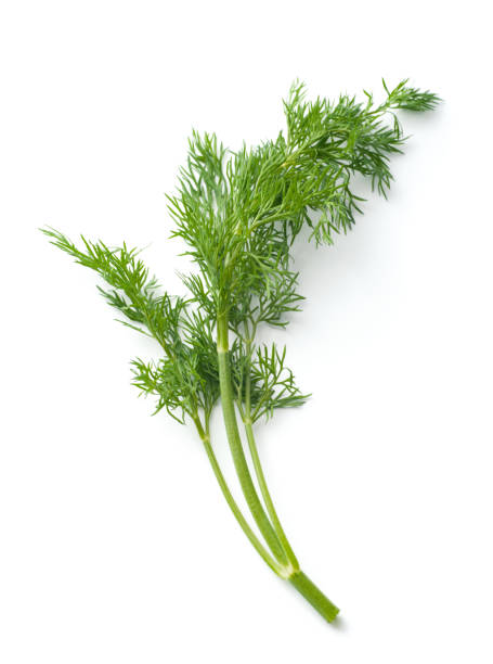 Isolated piece of dill against a white background Dill isolated on white dill stock pictures, royalty-free photos & images