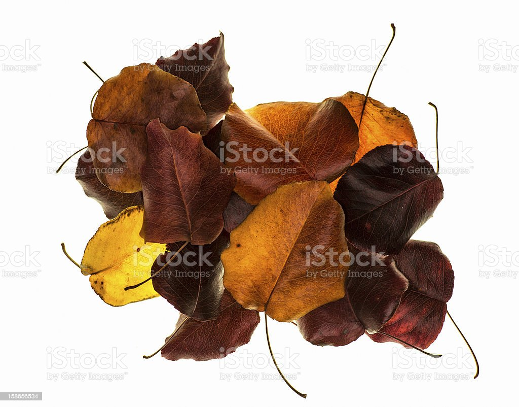 Isolated pile of leaves stock photo
