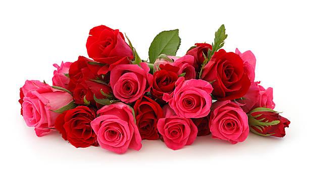 Bouquet de Roses Roses isolé - Photo