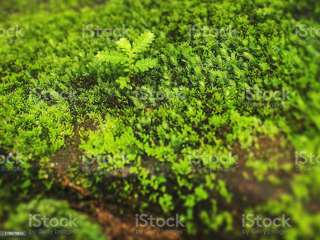 Isolated Plant stock photo