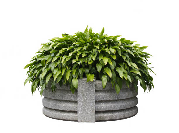 Isolated planter with clipping path stock photo