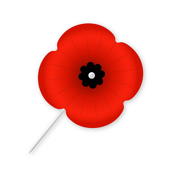 Isolated Poppy with Black Centre stock photo