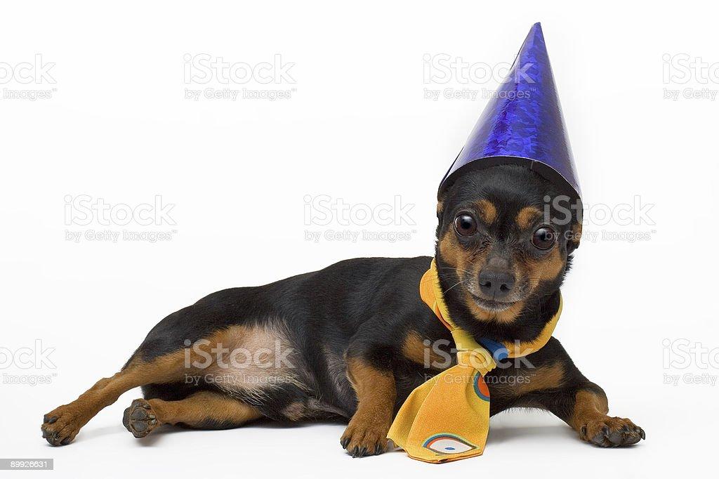 isolated portret of funny dog royalty-free stock photo