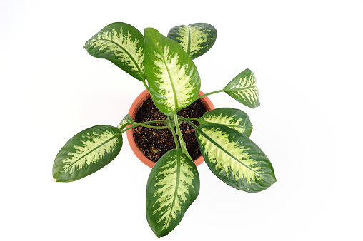 Isolated potted plant