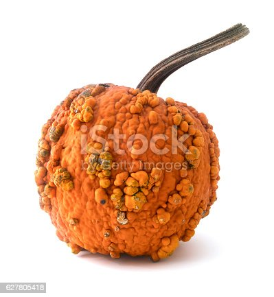 Isolated pumpkin with warts on a white background.