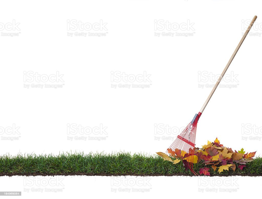 Isolated Rake and leaves on a strip of grass stock photo