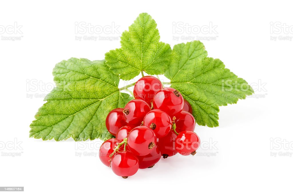 Isolated red currants royalty-free stock photo