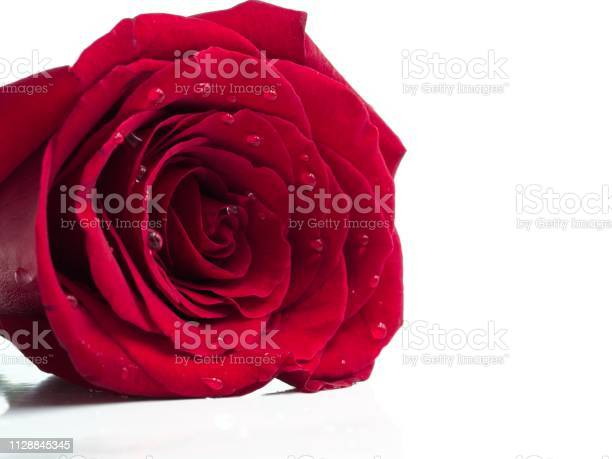 Isolated red rose on a white background justified to the left picture id1128845345?b=1&k=6&m=1128845345&s=612x612&h=n7tyooq5oxfncgoussvchp0hqmgnj ubbuzxxhp83jo=