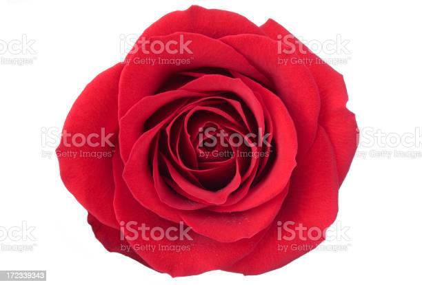 Isolated red rose picture id172339343?b=1&k=6&m=172339343&s=612x612&h=swhv6irm s1lbq0uuncccfz0jerum4kadc 1wz2nbsg=