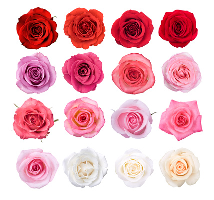 Roses in reds, pinks, and whites.