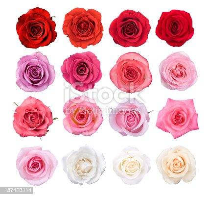wet red rose lies on white marble isolated on white background