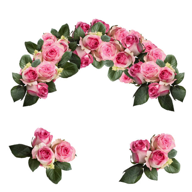 Isolated Rose Wreath Flowers Beautiful pink and white rose flowers with leaves arranged and isolated over a white background. Image shot from top view. composition stock pictures, royalty-free photos & images