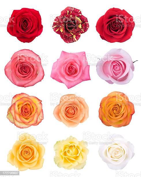 Isolated roses picture id172705637?b=1&k=6&m=172705637&s=612x612&h=1f qej70m26mdbnqe2fo85co uoihh0qlyennotwize=