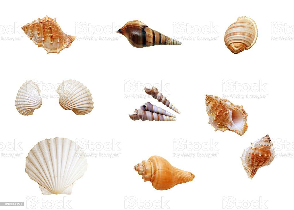 Isolated shells stock photo