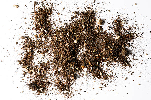 isolated shot of abstract dirt texture on white background - dirt stock photos and pictures