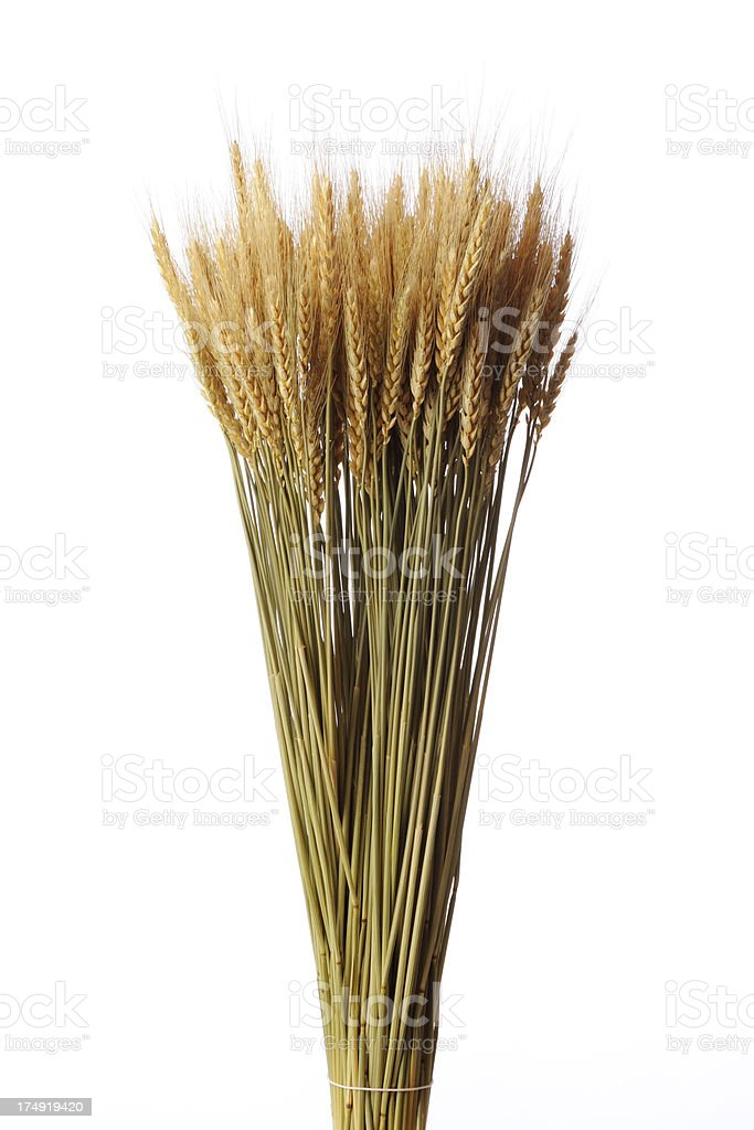 Isolated shot of bunch of golden wheat against white background stock photo