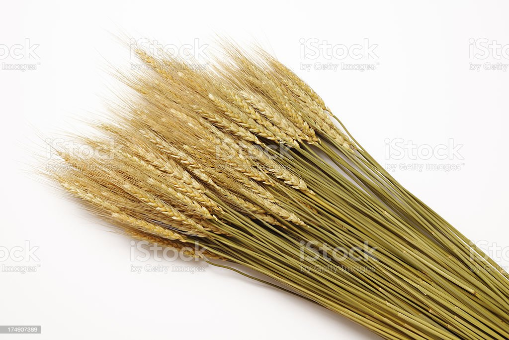 Isolated shot of bunch of golden wheat on white background stock photo