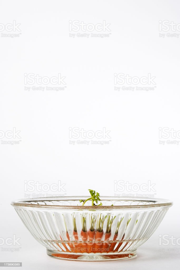Isolated shot of carrot top on white background stock photo
