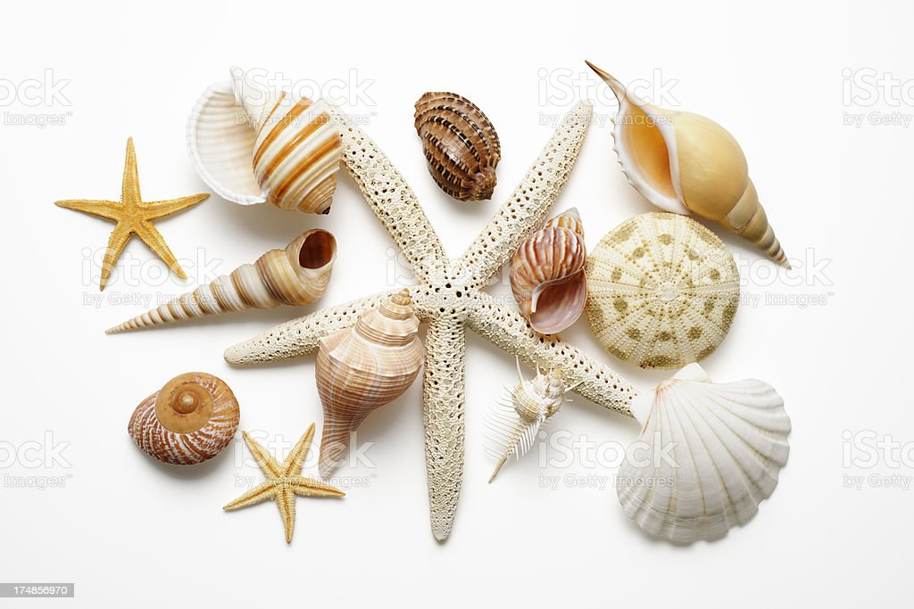 Isolated shot of collection of seashells on white background stock photo
