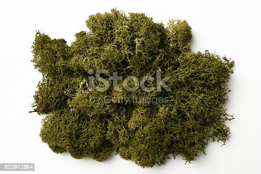 Overhead shot of green moss isolated on white background.