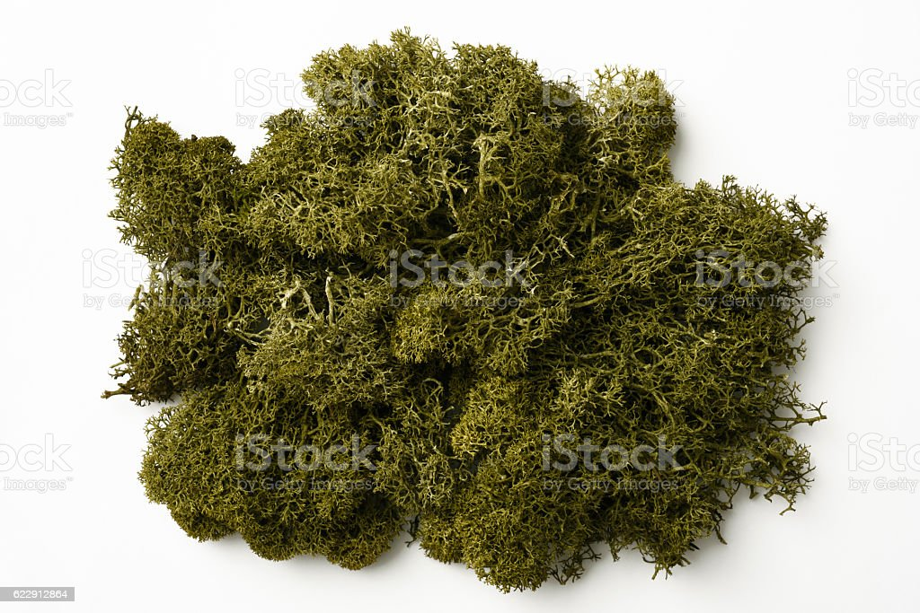 Isolated shot of green moss on white background stock photo