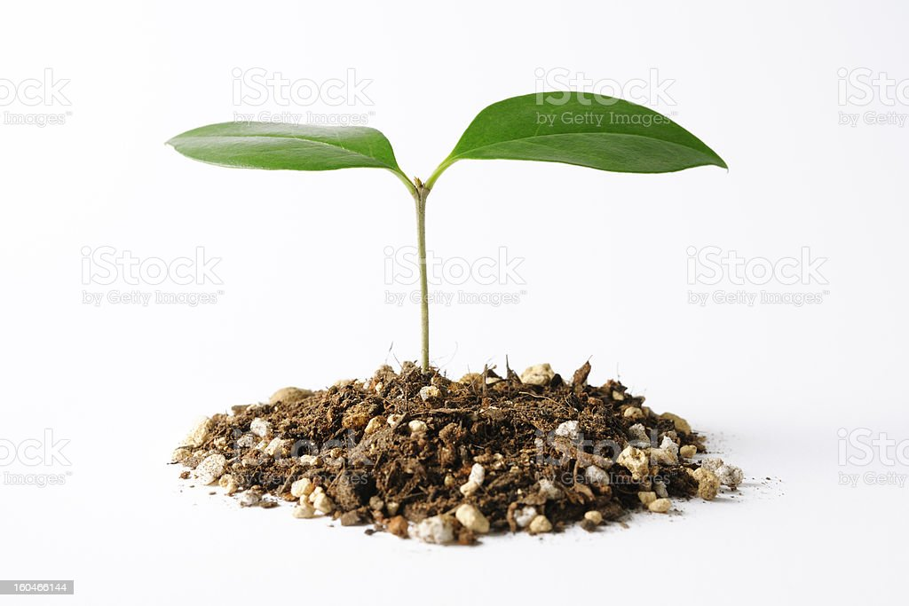 Isolated shot of new plant life on white background stock photo