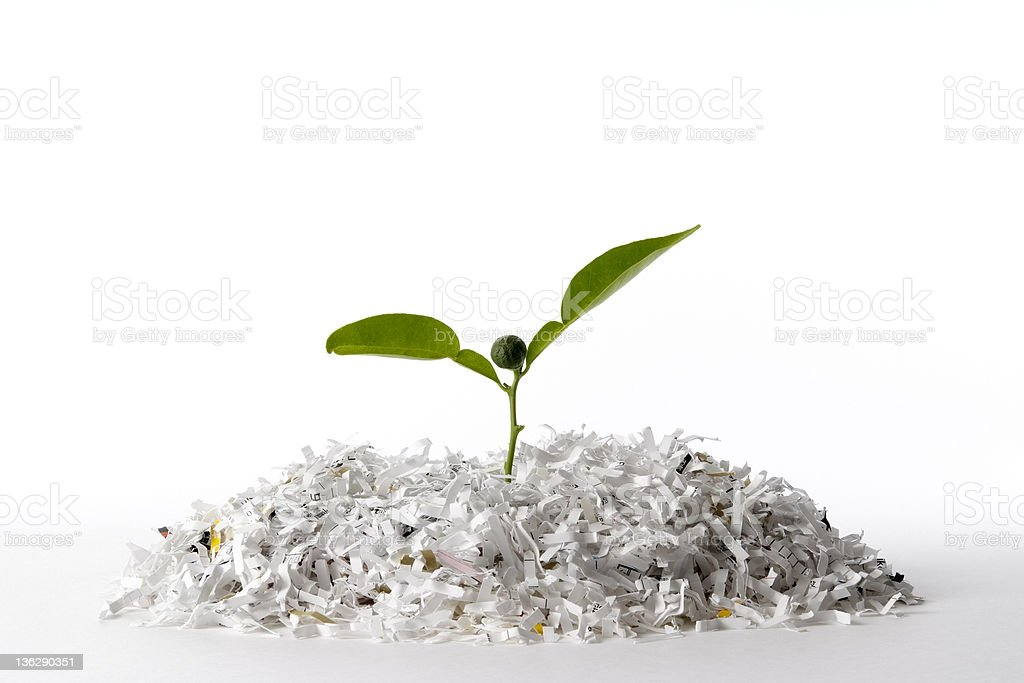Isolated shot of plant growing shredded paper on white background stock photo