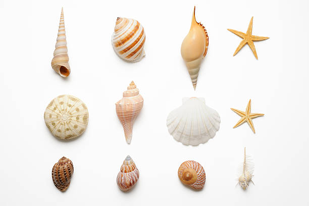 Isolated shot of seashells collection on white background stock photo