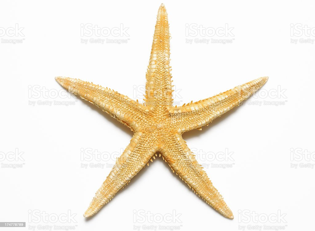 Isolated shot of Starfish on white background with shadow royalty-free stock photo
