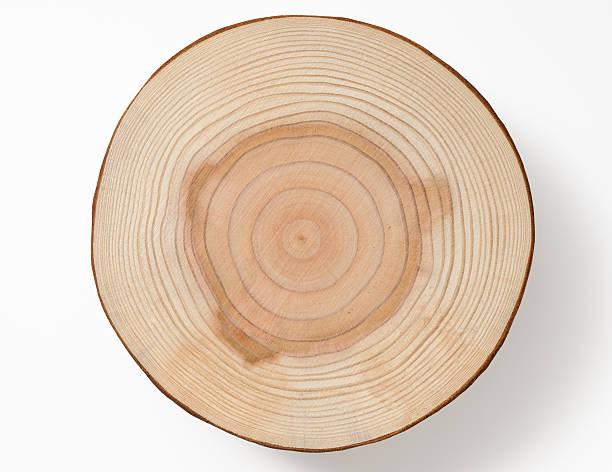 Isolado foto de árvore seção transversal no fundo branco - foto de acervo