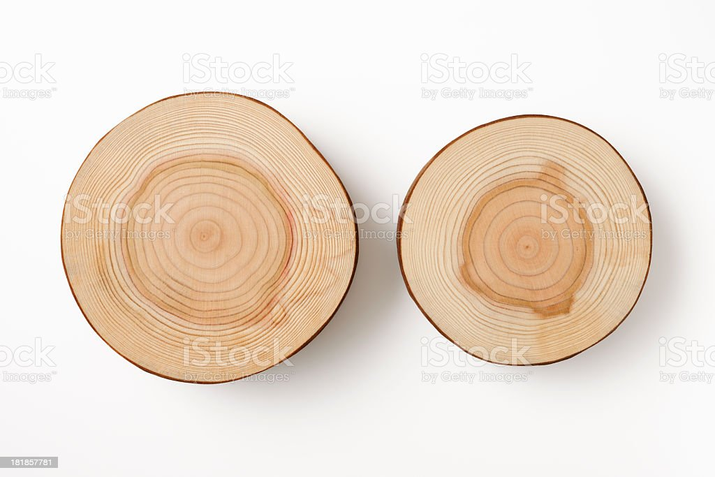 Isolated shot of two tree cross section on white background stock photo