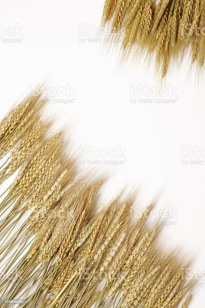 Isolated shot of wheat frame on white background stock photo